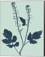 Indigo & Mint Botanical Study I Fine-Art Print