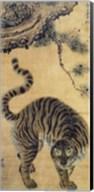 Tiger Under the Pine Tree Fine-Art Print