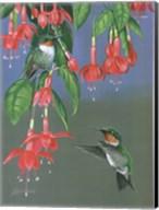 Hummers & Fuchsia Fine-Art Print