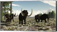 Woolly Mammoths in the prehistoric northern hemisphere Fine-Art Print