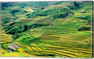 China, Yuanjiang, Cloudy Sea Terrace, Agriculture Fine-Art Print