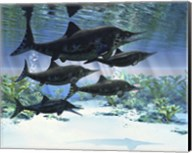 A group of Ichthyosaurs swimming in prehistoric waters Fine-Art Print