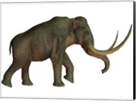 The Columbian mammoth, an extinct species of elephant Fine-Art Print