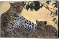 Leopard and Cub Resting, Masai Mara Game Reserve, Kenya Fine-Art Print