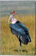 Marabou Stork, Kenya Fine-Art Print
