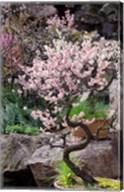 Pink spring blooms on tree, Yu Yuan Gardens, Shanghai, China Fine-Art Print