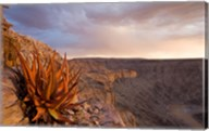 Namibia, Fish River Canyon National Park, desert plant Fine-Art Print