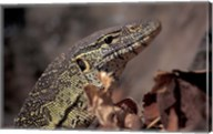 Nile Monitor Lizard, Gombe National Park, Tanzania Fine-Art Print