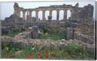 Red Poppies near Basilica in Ancient Roman City, Morocco Fine-Art Print
