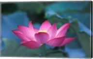Red Lotus Flower, Hangzhou, Zhejiang Province, China Fine-Art Print