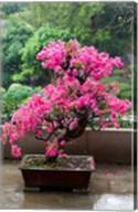 Spring Blossoms cover Bonsai, The Chi Lin Buddhist Nunnery, Hong Kong, China Fine-Art Print