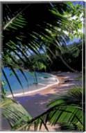 Tropical Foliage and Beach, Seychelles Fine-Art Print