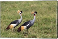 Two Crowned Cranes, Ngorongoro Crater, Tanzania Fine-Art Print