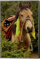 Horse at the Horse Racing Festival, Zhongdian, Deqin Tibetan Autonomous Prefecture, Yunnan Province, China Fine-Art Print