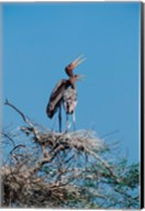 A pair of Painted Stork in a tree, India Fine-Art Print