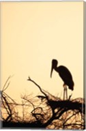 Painted Stork in Bandhavgarh National Park, India Fine-Art Print