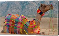 Brightly decorated camel, Pushkar, Rajasthan, India. Fine-Art Print