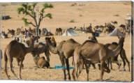 Camel Market, Pushkar Camel Fair, India Fine-Art Print