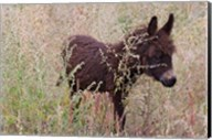 Little Donkey, Leh, Ladakh, India Fine-Art Print