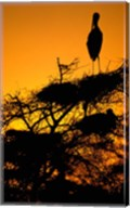 Silhouette of Painted Stork, Keoladeo National Park, Rajasthan, India Fine-Art Print