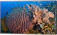 Marine Life Fine-Art Print