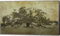 Sugarmill Oak, Louisiana Fine-Art Print