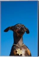 Israel, Tel Aviv, Dog, Jewish Star of David medallion Fine-Art Print