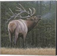 Broken Silence - Elk Fine-Art Print