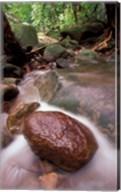 Rainforest Stream, Bako National Park, Borneo, Malaysia Fine-Art Print