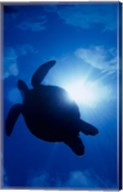 Sea Turtle Underwater, Sipadan Island South Point, Malaysia Fine-Art Print