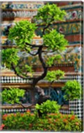 Bonsai tree in front of chedi, Wat Pho, Bangkok, Thailand Fine-Art Print