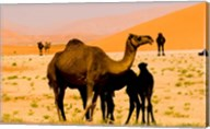 Oman, Rub Al Khali desert, camels, mother and calves Fine-Art Print