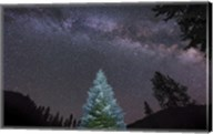 Pine Tree Glows Under the Arch of the Milky Way Fine-Art Print