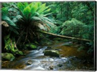 Nelson Creek, Franklin Gordon Wild Rivers National Park, Tasmania, Australia Fine-Art Print
