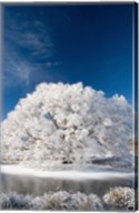 Hoar Frost on Willow Tree, near Omakau, Central Otago, South Island, New Zealand Fine-Art Print