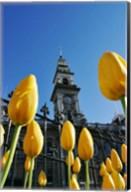 Tulips and Municipal Chambers Clocktower, Octagon, Dunedin, New Zealand Fine-Art Print