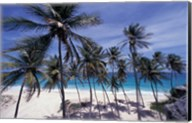 Palm Trees on St Philip, Barbados, Caribbean Fine-Art Print