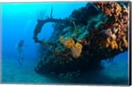Scuba diver, RMS Rhone wreck, British Virgin Isl Fine-Art Print