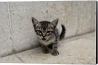 Cute kitten on the streets of Old Havana, Havana, Cuba Fine-Art Print