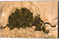 Bat wildlife, Cave, Ankarana NP, Madagascar Fine-Art Print