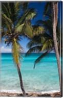 Cuba, Matanzas Province, Varadero, Varadero Beach palms Fine-Art Print