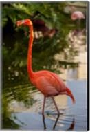 Pink flamingo, Bavaro, Higuey, Punta Cana, Dominican Republic Fine-Art Print