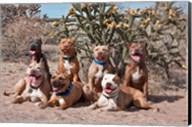 American Pitt Bull Terrier dogs, cactus Fine-Art Print