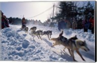 Sled Dog Team Starting Their Run on Mt Chocorua, New Hampshire, USA Fine-Art Print