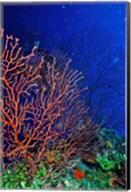 Underwater, Bonaire, Netherlands Antilles Fine-Art Print