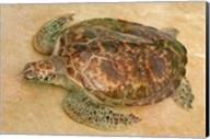 St Vincent, Grenadines Old Hegg Turtle Sanctuary Fine-Art Print