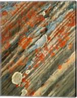 Lichens on stone, Banff NP, Alberta, Canada Fine-Art Print