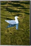 Bird, Desolation Sound, British Columbia, Canada Fine-Art Print