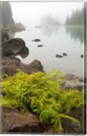 Alpine lady fern, Garibaldi Lake, British Columbia Fine-Art Print