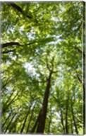 Woods, Shenandoah National Park Fine-Art Print